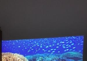 投影仪澳典M18看蓝色星球第二季预告片的效果很震撼